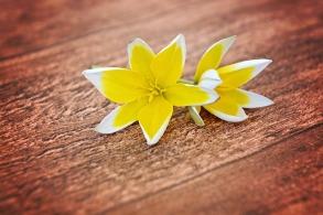 flowers-747206_640.jpg